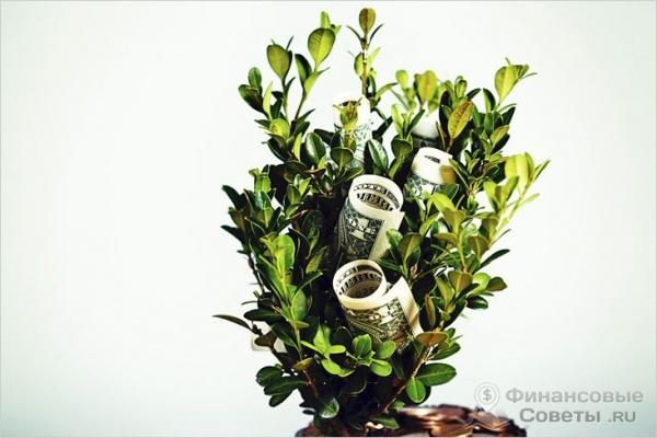 Фото - С чего начать цветочный бизнес — бизнес по продаже цветов